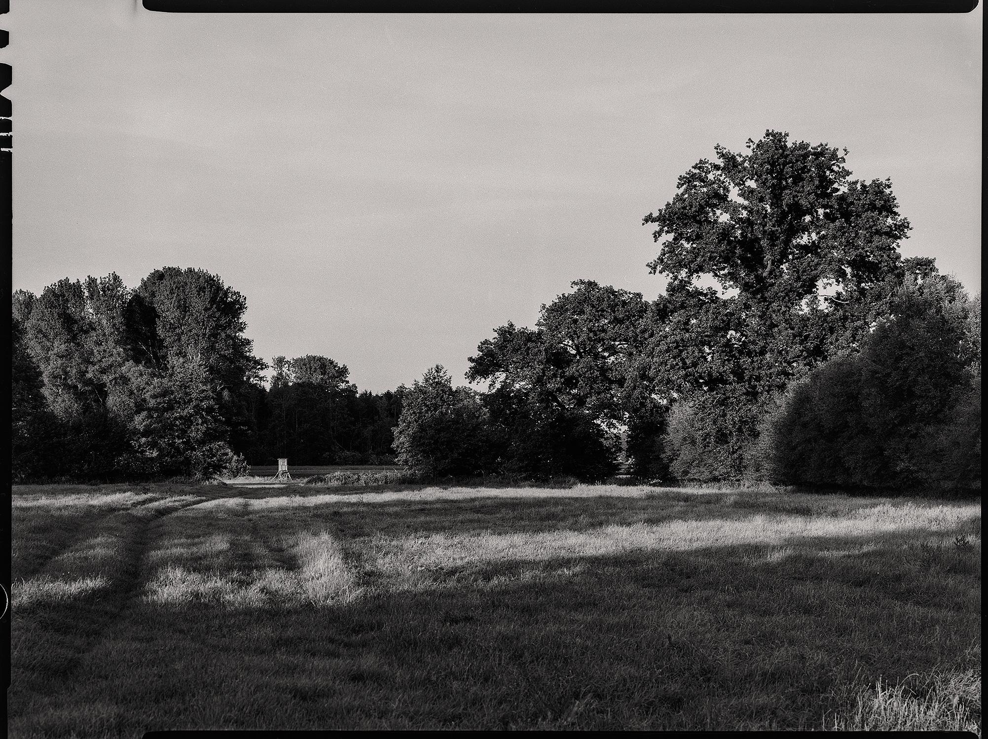Hochsitz am Waldrand im Abendlicht