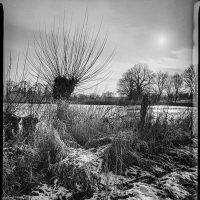 Kopfweide im Schnee gegen die tiefe Sonne