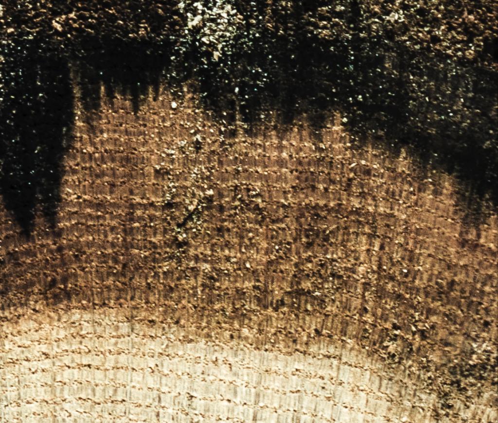 Detailansicht des Baumschnitts bei 1:1-Pixelansicht