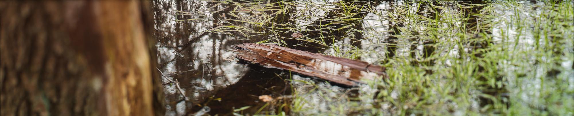 Treibende Rinde auf einem Teich, extremes Querformat