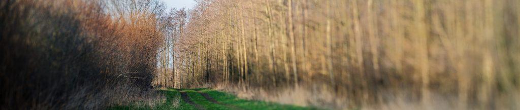 Baumpanorama mit Schärfeebene parallel zum Weg