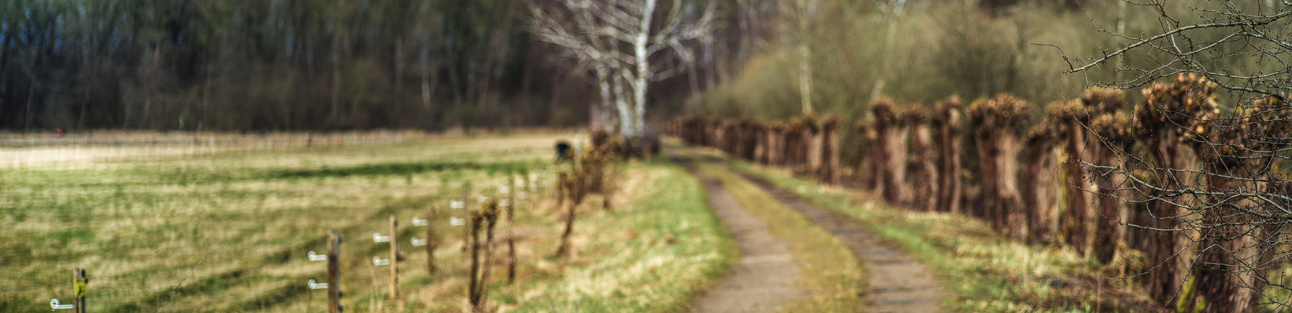 Weg durch die Weiden, unscharf bis auf einen Ast, der von rechts ins Bild ragt