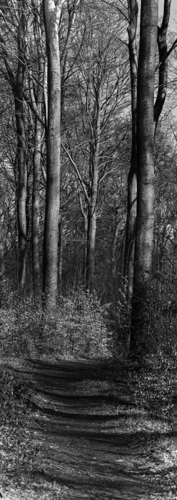 sonniger Waldweg, schwarzweiß, hochformatiges Panorama