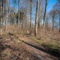 Waldweg unter blauem Himmel