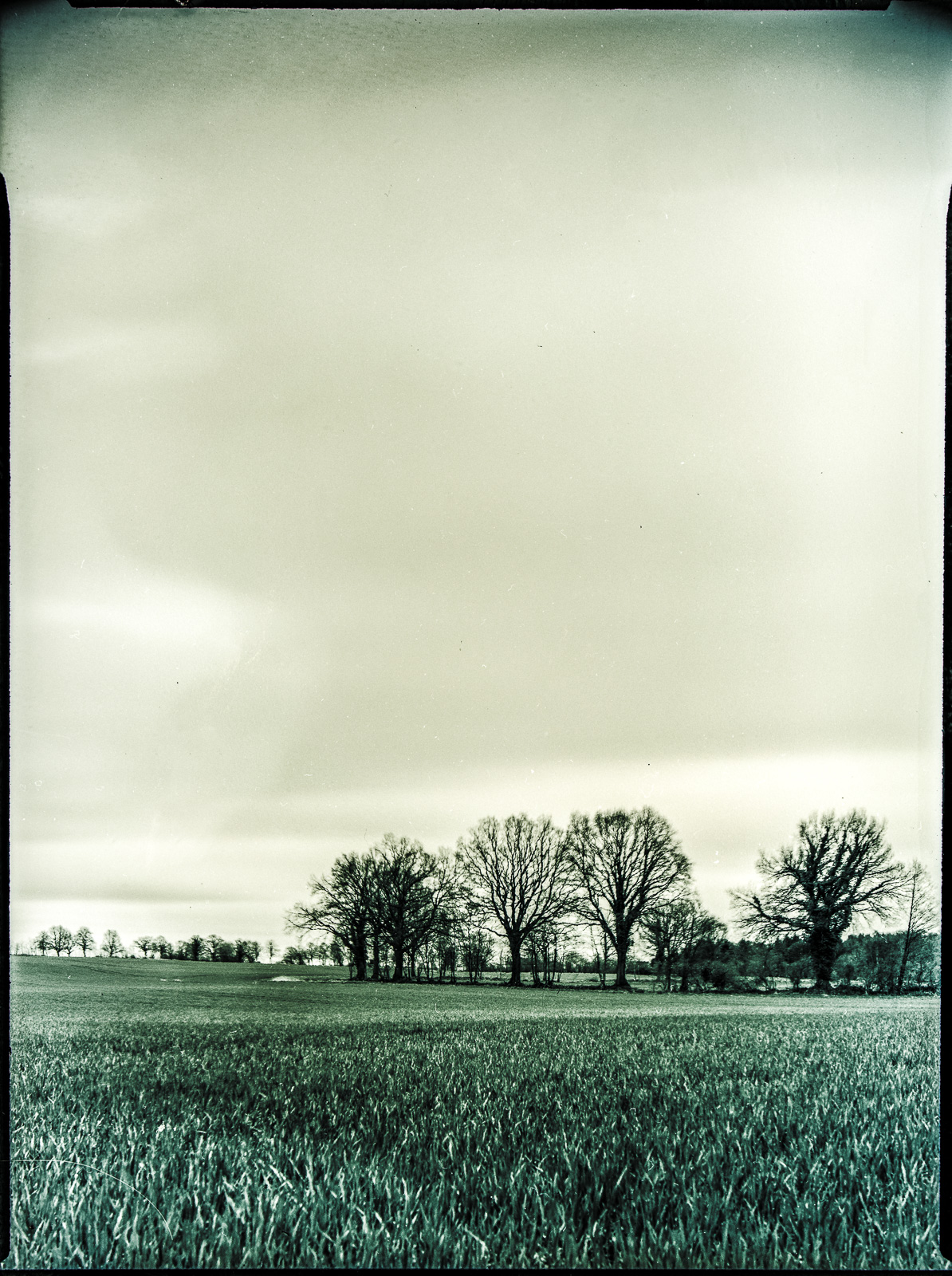 Feld und Bäume mit viel Himmel darüber, Planfilm 9x12, Orwo DN2 wie 0 DIN in Rodinal 1:100