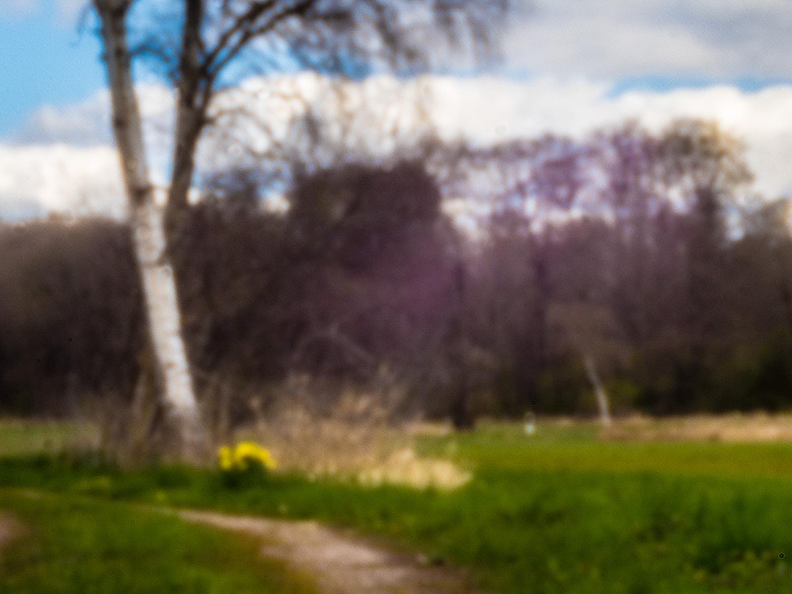 Birke und Osterglocken auf dem Feld, Lochkamera bei ca. 80mm Bildweite