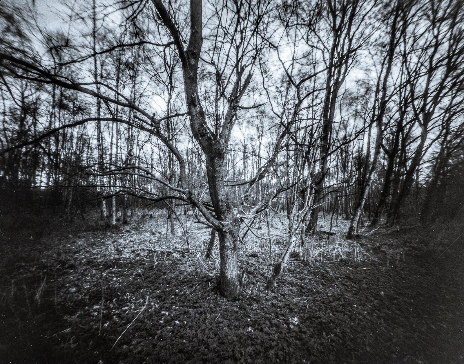 Lochkamera-Aufnahme diverser Bäume
