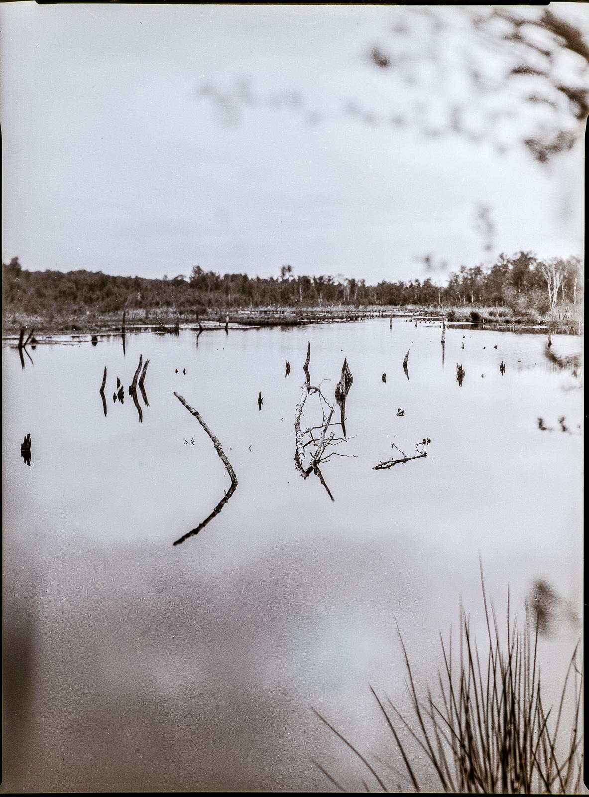 Wittmoor, Hamburg, zentrale Wasserfläche, Hochformat mit leichtem Tilt-Effekt
