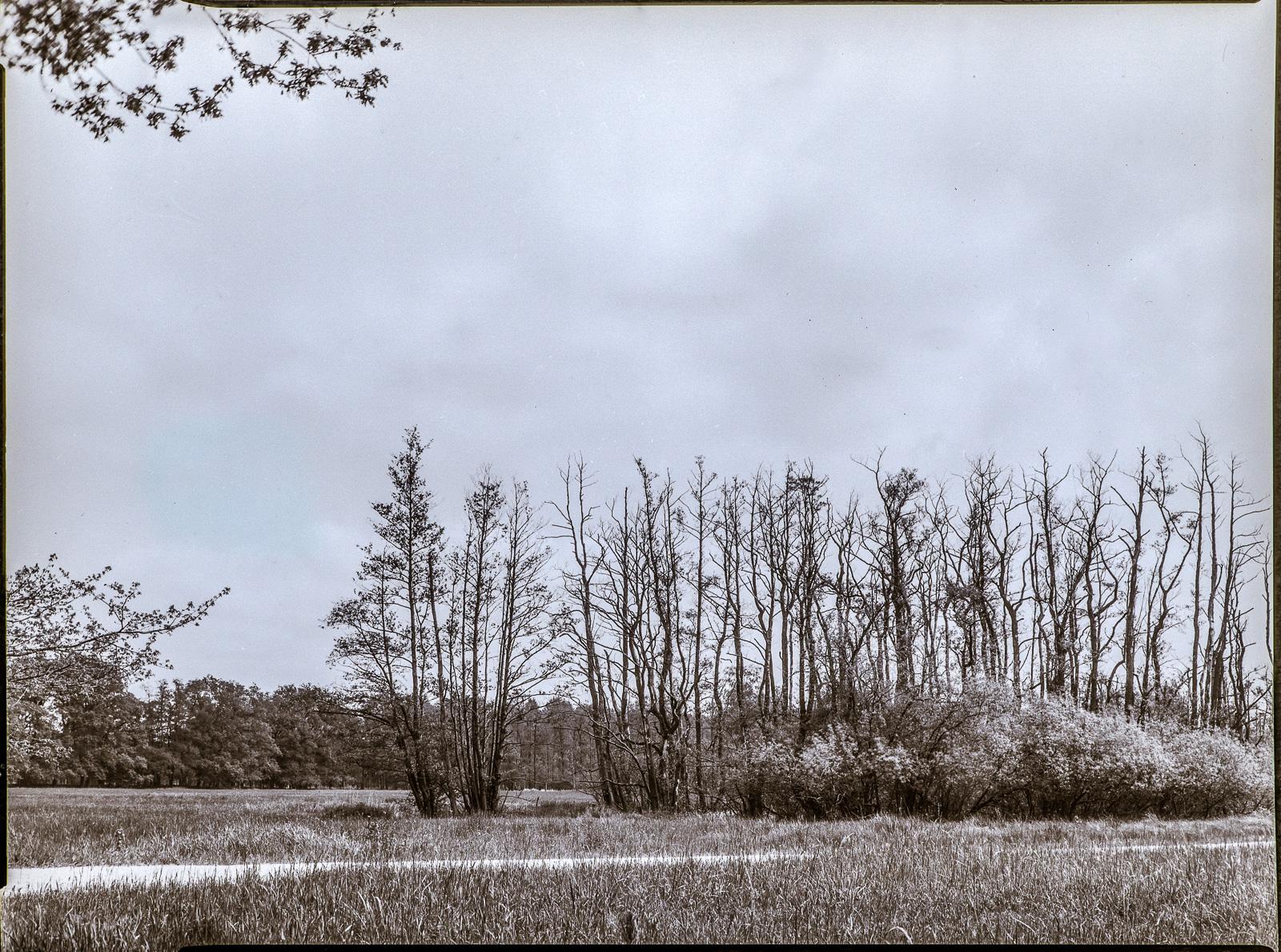 Duvenstedter Brook, kahle Baumgruppe