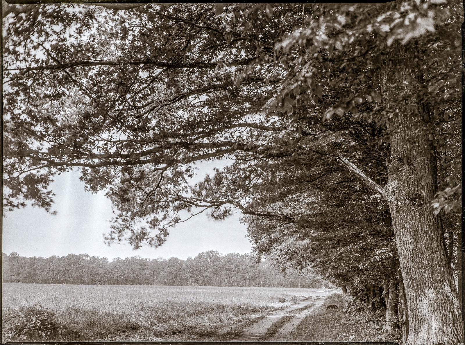 Duvenstedter Brook, Weg zwischen Wald und Feld