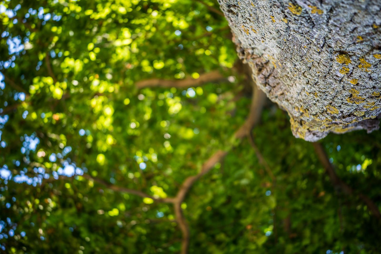 Blick am Baumstamm nach oben