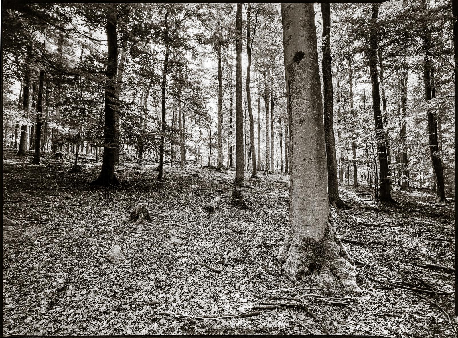 Bäume an einem Hügel im Gegenlicht