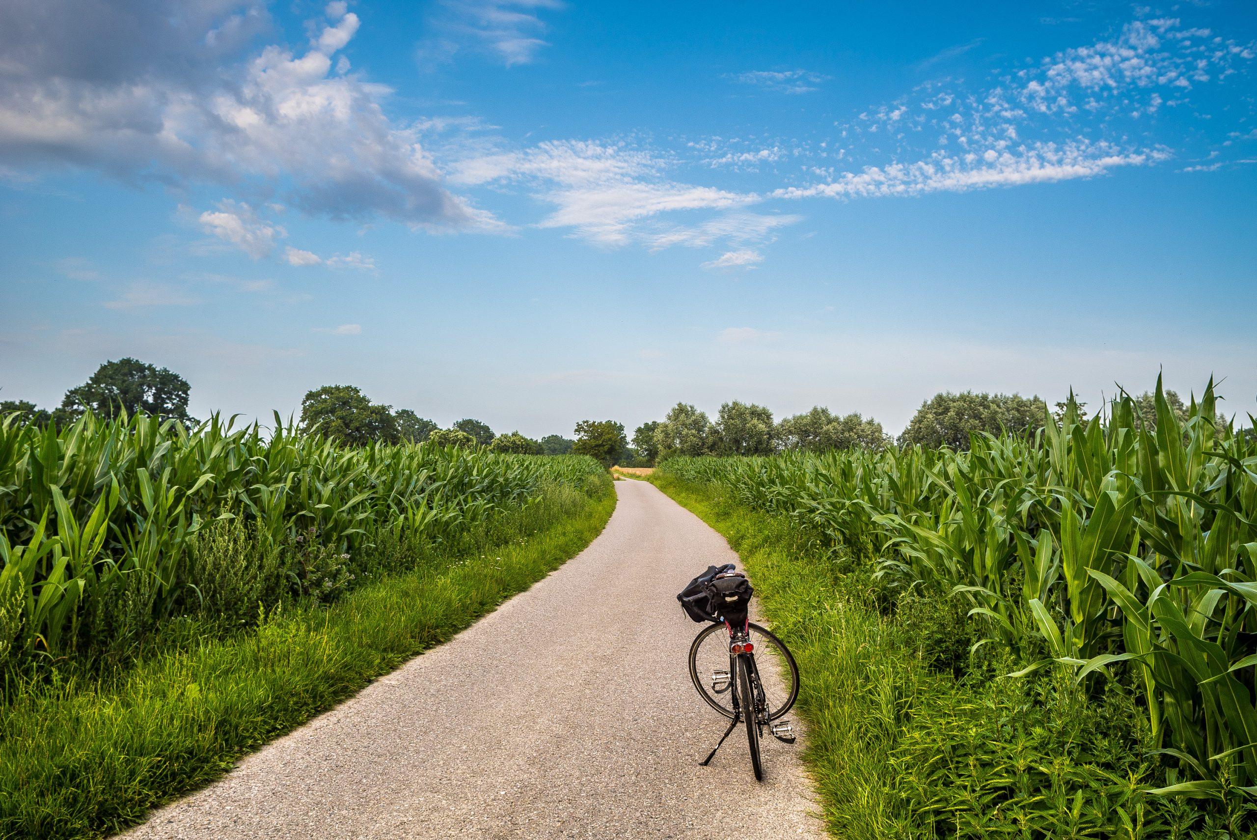 Fahrrad auf schmaler Feldstraße zwischen Maisäckern