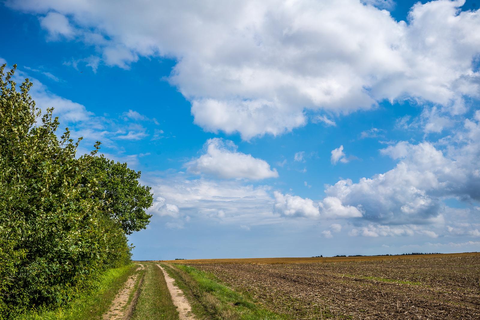 Schäfchenwolken über einem Feldweg kurz vor Ratzeburg